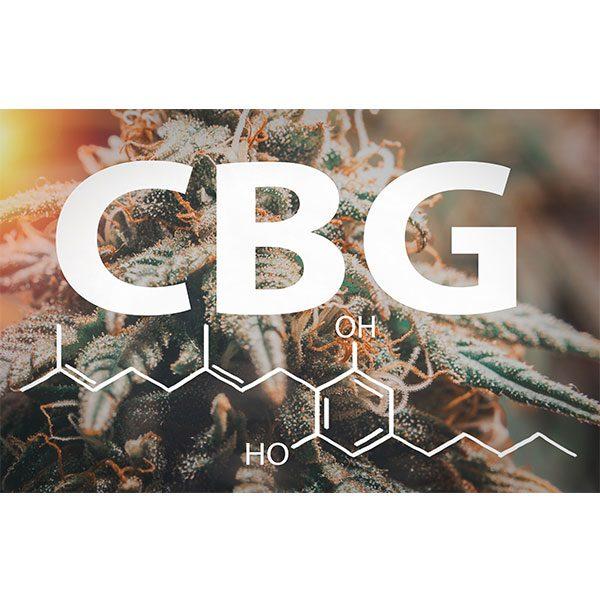 cbd-nutrition-cbd-blogs-alles-ueber-cannabigerol-2