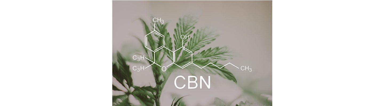 cbd-nutrition-cbd-blogs-was-ist-cannabinol